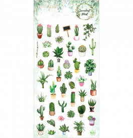 DA5482 다육식물
